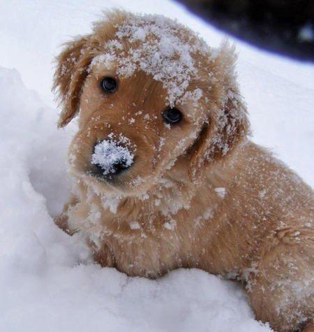 sobaki-v-snegu2