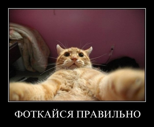 Кот отлично сфотографировался