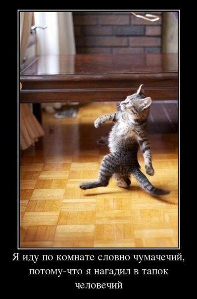 Чумовой котяркин