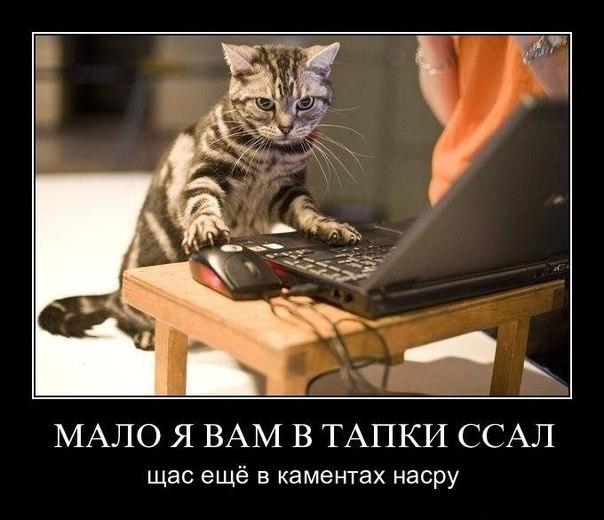 Кот-народный мститель
