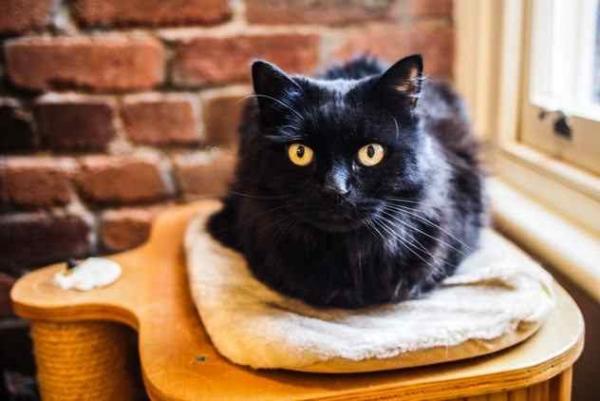 Фото. Уселась черная кошка