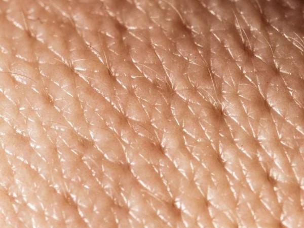 Фото. мышцы под волосами