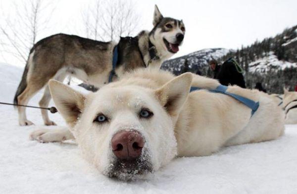 убийство гончих собак