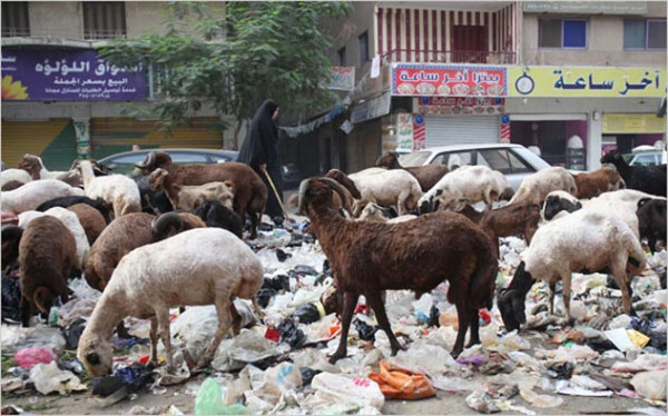 свинной грипп в Египте