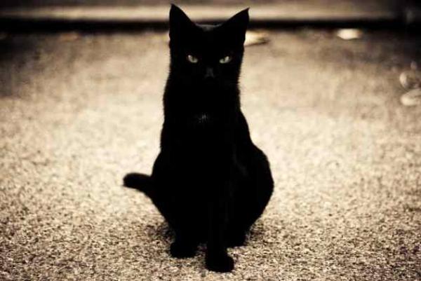 Фото. Черная кошка на дороге