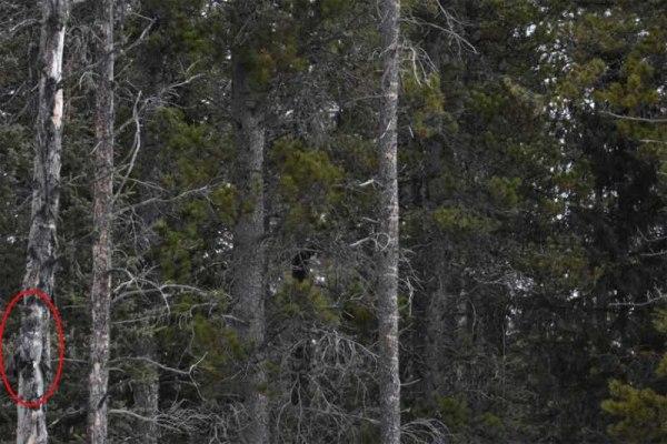 невидимая сова на дереве