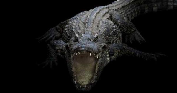 Фото. Крокодил