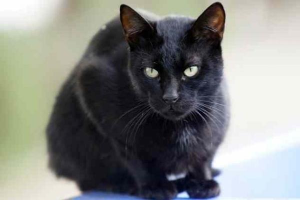 Фото. Черный кот на заборе