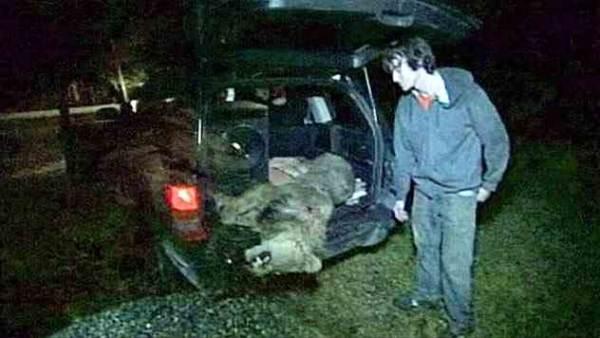 убийство животных в Америке
