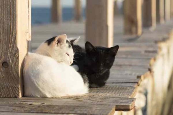 Фото. Черный и белый кот