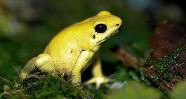 Фото. Золотая лягушка