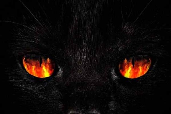 Фото. Огненные глаза черной кошки