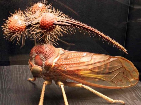Фото. Бразильская горбатка (лат. Bocydium globulare)