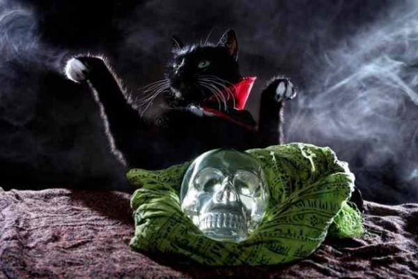 Фото. Черная кошка и магия