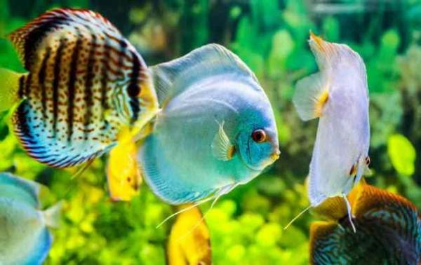 Фото. Рыбы в аквариуме