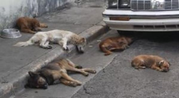 улчиные собаки спят
