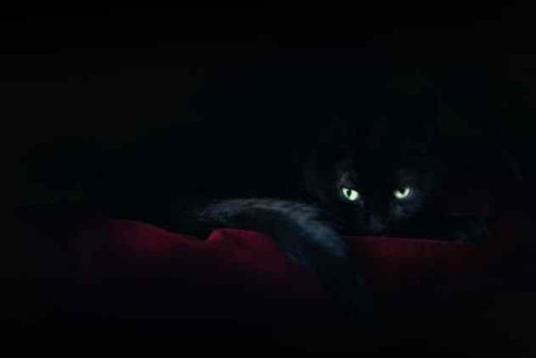 Фото. Черная кошка в темноте