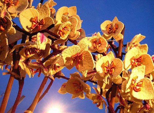 bloemencorsozundert13