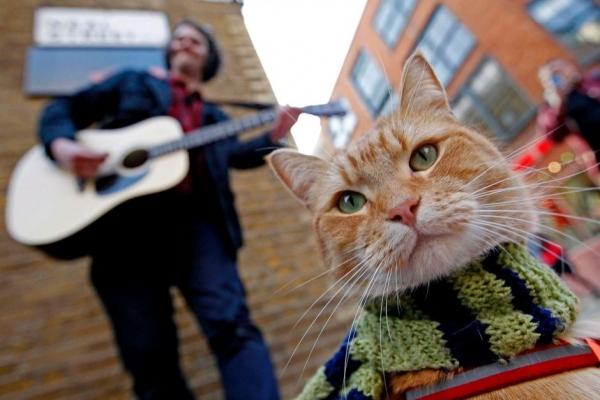 cat_bob10