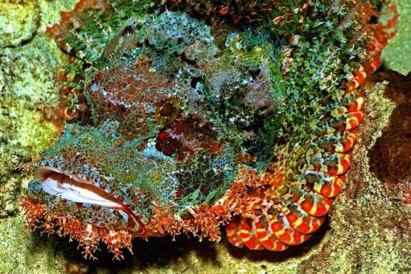 morskie-chudovischa4