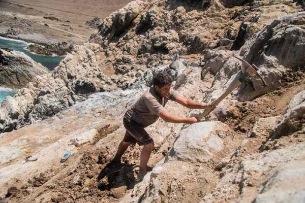 Фото. Добыча гауно на острове