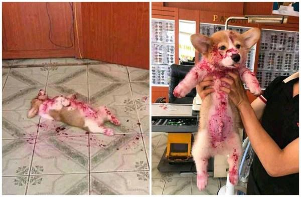 Собака напугала хозяйку