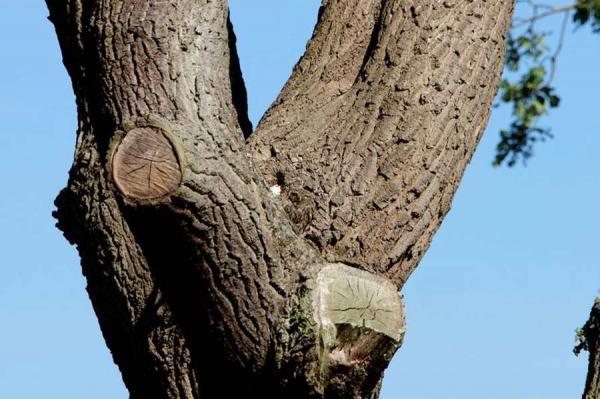 сова сидит на дереве