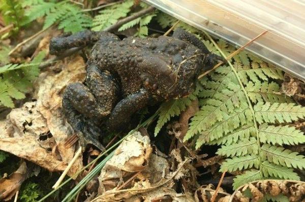 Фото. Жаба без головы