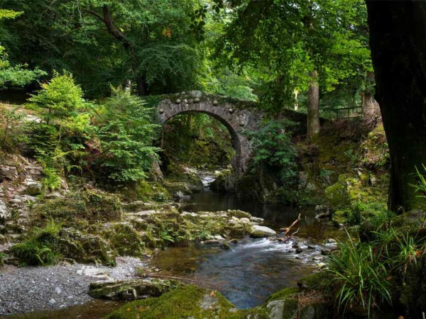 Фото. Мост в лесном парке Толлимор