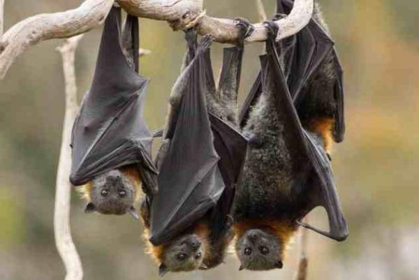 Фото. Летучие мыши