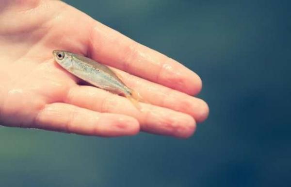 Фото. Живая рыба