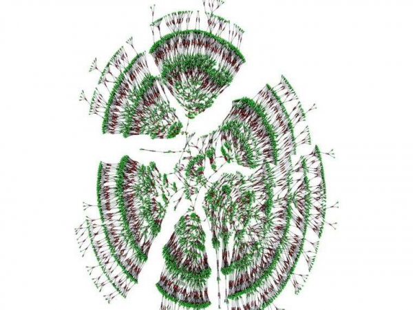 Фото. Самое большое генеалогическое древо