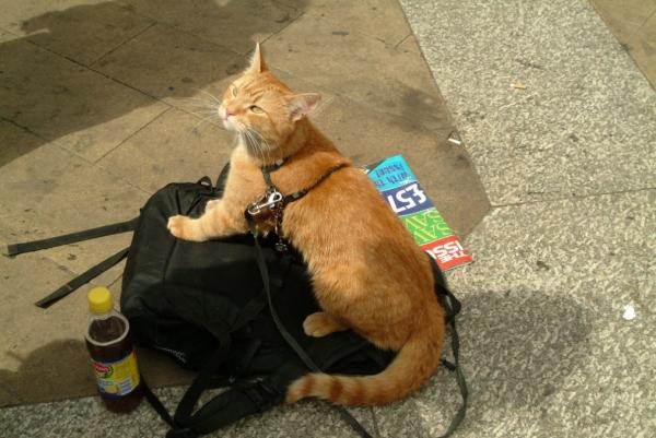 cat_bob4