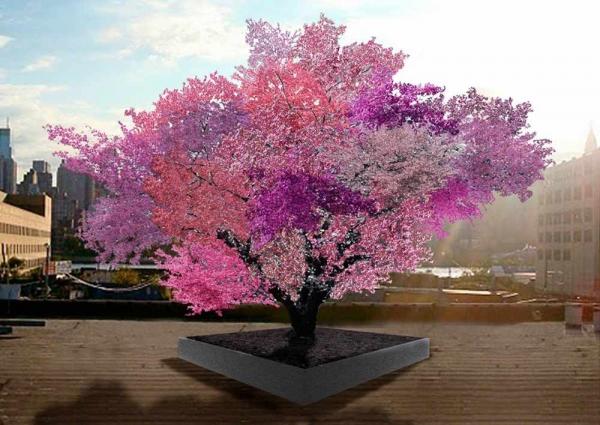Фото. Цветение дерева разными класками, дающее 40 фруктов