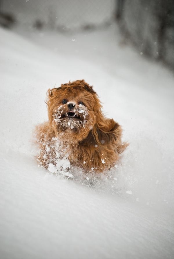 sobaki-v-snegu15