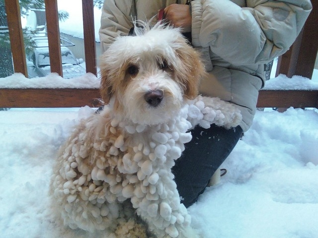 sobaki-v-snegu16