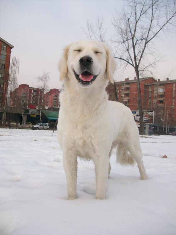 sobaki-v-snegu17
