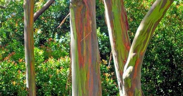 Фото. Разноцветные деревья
