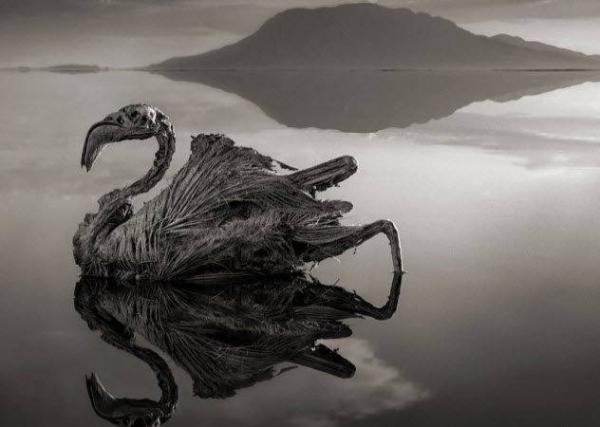 Фото. Озеро Натрон