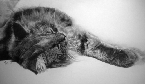cat-drawings5
