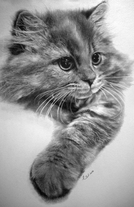 cat-drawings2