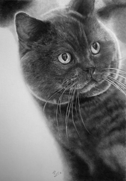 cat-drawings3