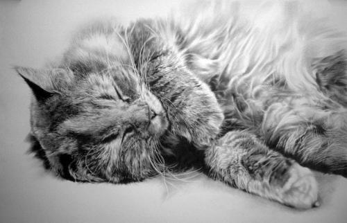 cat-drawings6