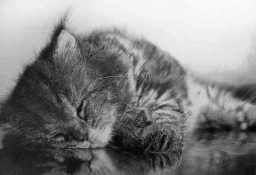 cat-drawings7