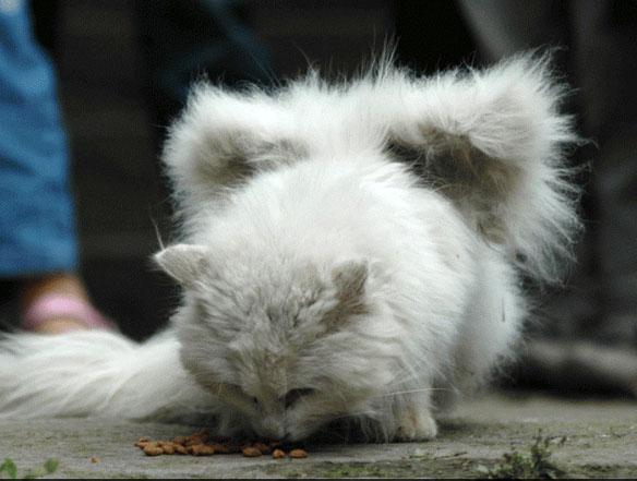 Интересно коты с крыльями