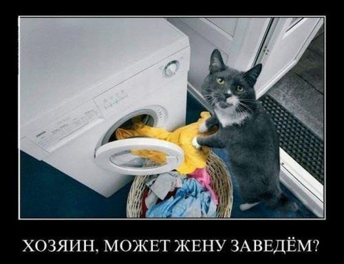 Фото. Котяркин отжигает