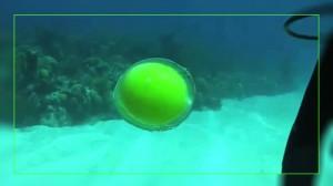 Фото. Яйцо под водой