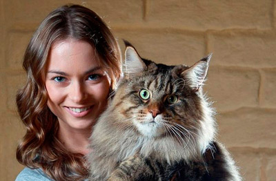 Фото. Руперт (Rupert) - самый крупный кот в мире