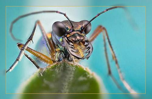 Фото. Макросъемка муравья