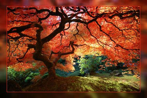 Фото. Сад в в Портленде, США